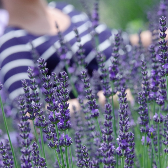 lavender and shirt