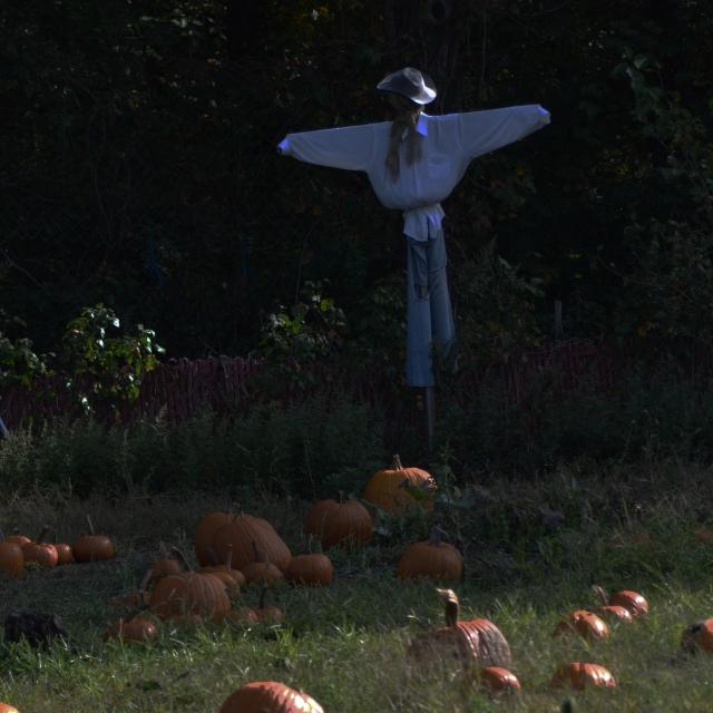 dark scarecrow.jpg