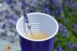 lavendar cup