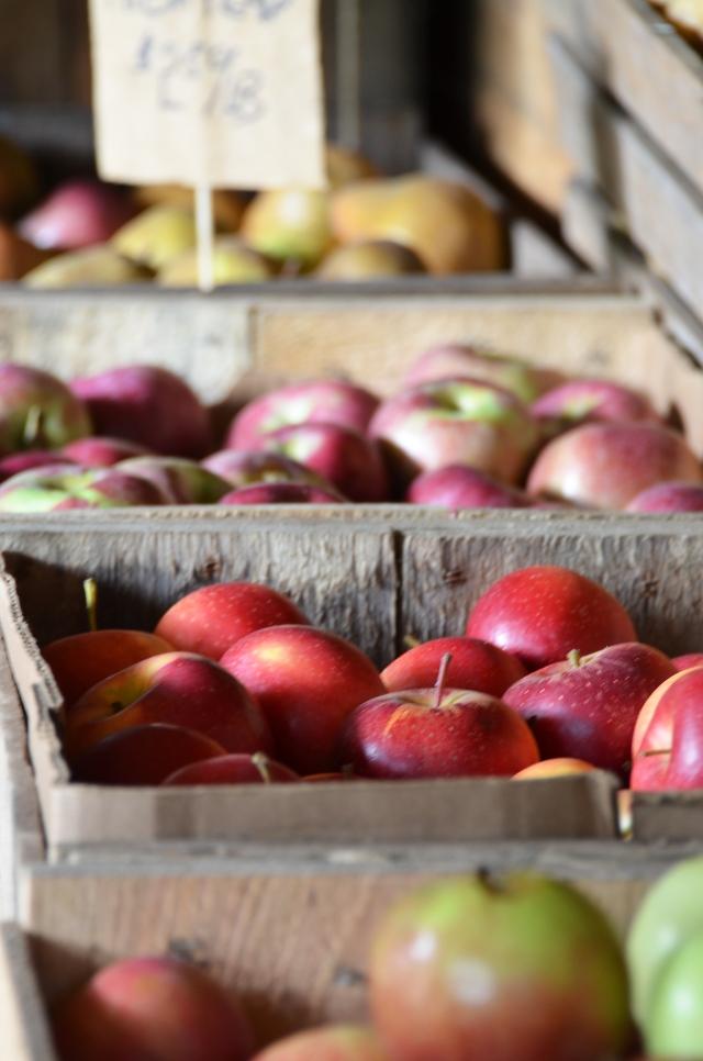 OT apples.jpg