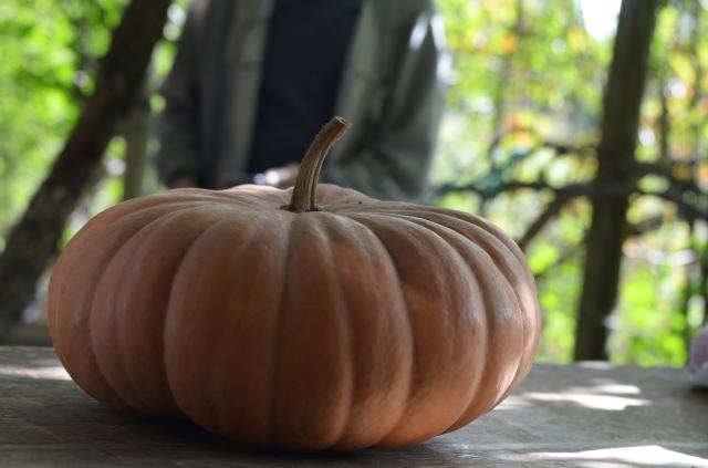 ot cheese pumpkin