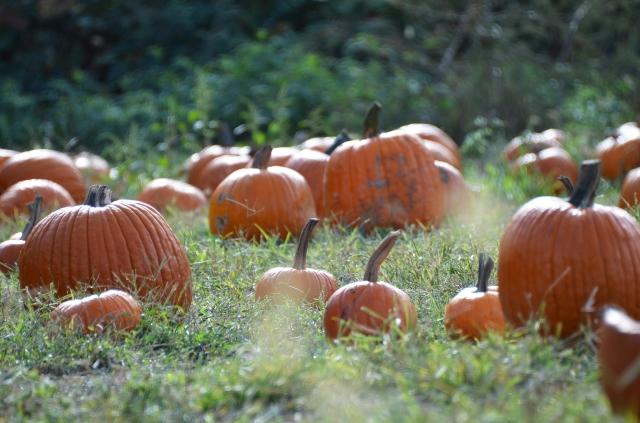 ot pumpkin patch